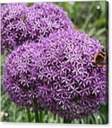 Favorite Butterfly Spot Acrylic Print