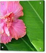 Favorite Flower 2 Acrylic Print