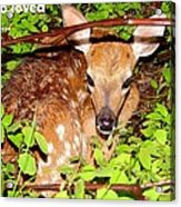 Fawn In The Forest - Inspirational - Religious Acrylic Print