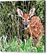 Fawn In The Grass Acrylic Print by Marty Koch