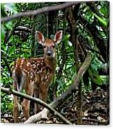Fawn In The Woods Acrylic Print