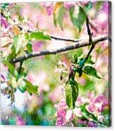 Feast Of Life 22 - Apple - The Beginning Acrylic Print