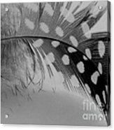 Feather 2 Acrylic Print