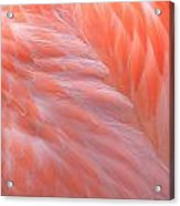 Feather Abstract 2 Acrylic Print