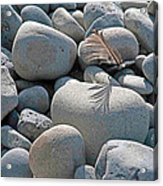 Feather And Cobbles Acrylic Print