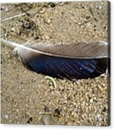 Feather And Inchworm Acrylic Print