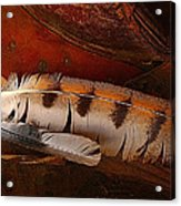 Feather And Leather Acrylic Print