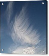 Feather Cloud  By Diane Schiabor Acrylic Print