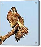 Feather Display Acrylic Print
