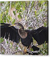Feather Drying Acrylic Print