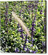 Feather In The Crowd Acrylic Print