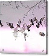 Feather Light Acrylic Print
