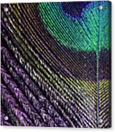 Feather Of A Different Color Acrylic Print