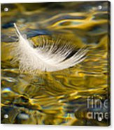 Feather On Golden Water Acrylic Print