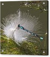 Feather Perch Acrylic Print