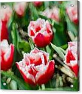 Feather Red Acrylic Print