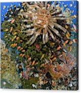 Feather Star (crinoidea Acrylic Print