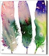 Feathers 4 Acrylic Print