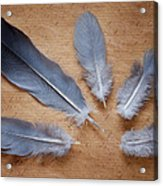 Feathers And Old Letter Acrylic Print