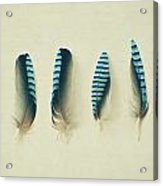 Feathers No1 Acrylic Print