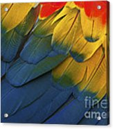 Feathery Details... Acrylic Print
