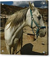 Featured Cute Friend In The Mountain Spain  Acrylic Print