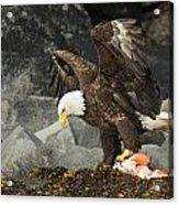 The Ultimate Bald Eagle Acrylic Print