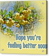 Feel Better Soon Greeting Card - Barberry Blossoms Acrylic Print