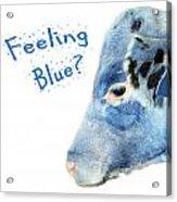 Feeling Blue Calf Acrylic Print
