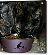 Feline Friends Acrylic Print
