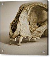 Felis Catus Acrylic Print