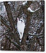 Felis Silvestris Catus In Winter Acrylic Print