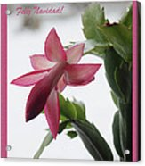 Feliz Navidad Pink Christmas Cactus Photo Greeting Card  Acrylic Print