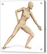 Female Body In Dynamic Posture Acrylic Print