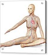 Female Body Sitting In Dynamic Posture Acrylic Print
