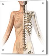 Female Body With Bone Skeleton Acrylic Print