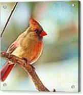 Female Cardinal - Digital Paint IIi Acrylic Print