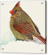 Female Cardinal In Winter II Acrylic Print