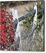 Fence And Creeper Acrylic Print