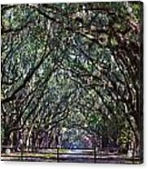 Fence And Wormsloe In Savannah  Acrylic Print
