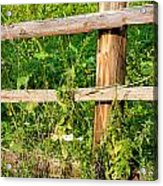 Fence Detail Acrylic Print