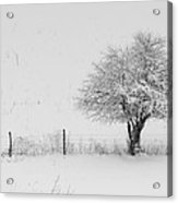 Fence Line In The Wintertime  Acrylic Print