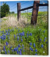 Fence Posts Acrylic Print