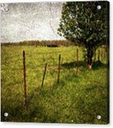 Fence With Tree Acrylic Print