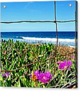 Fenced In Acrylic Print