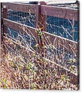 Fenceline 2 Acrylic Print