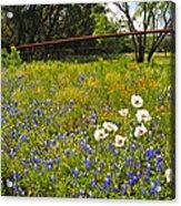 Fenceline Wildflowers Acrylic Print