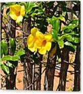 Fency Free Brazlian Flowers Acrylic Print
