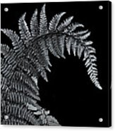 Fern At Night Acrylic Print