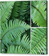 Fern Collage Acrylic Print